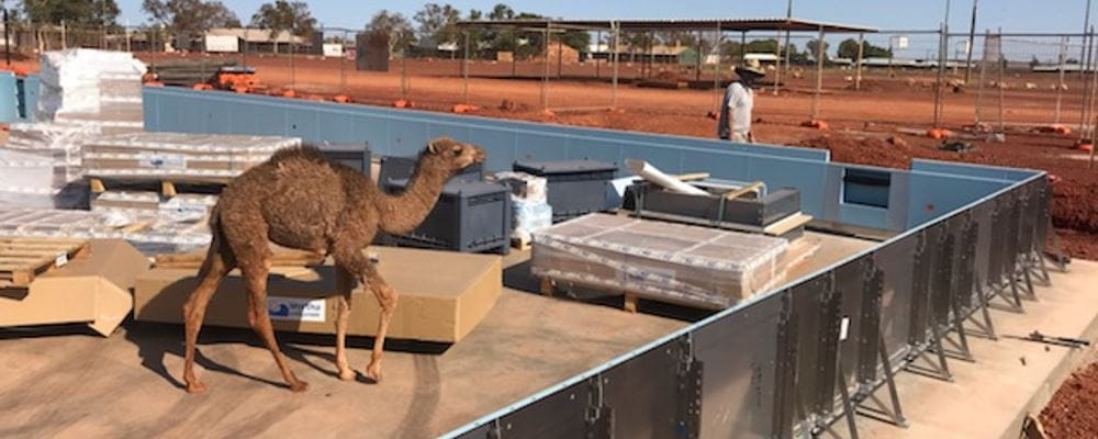 A camel walking through a pool construction side with red dirt landscape in the background