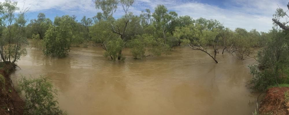 Image of a very swollen Fitzroy River with trees under water