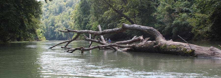 A tree branch fallen into a river